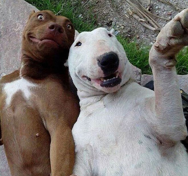 Animal-Selfies-10