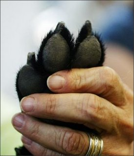 Paw_and_hand