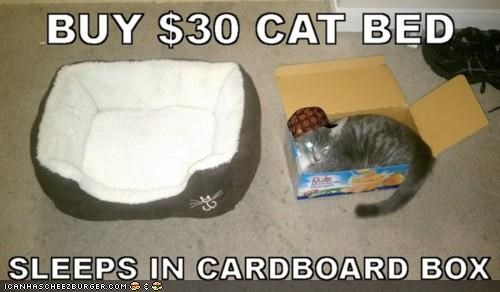 30catbed