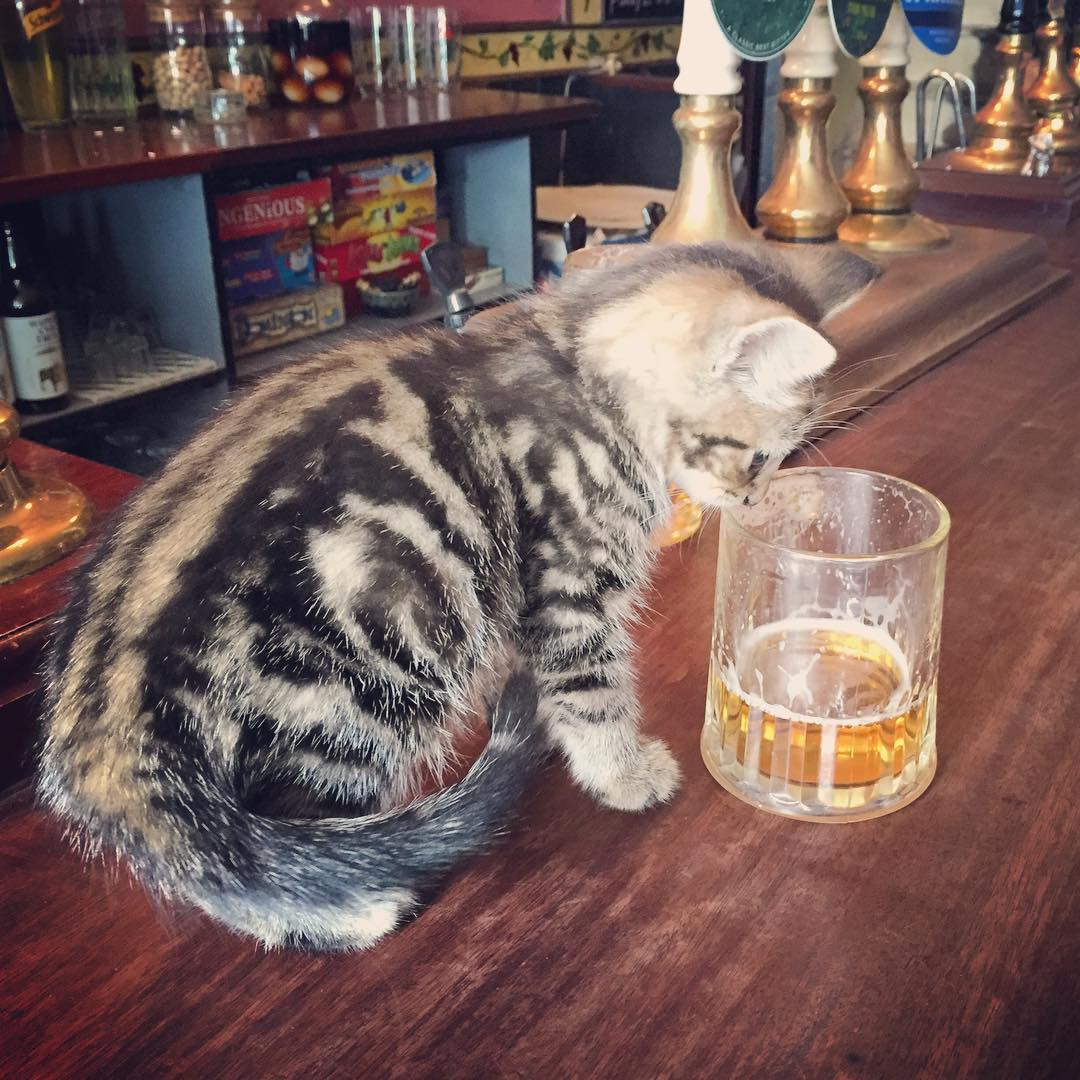 beer with kitten